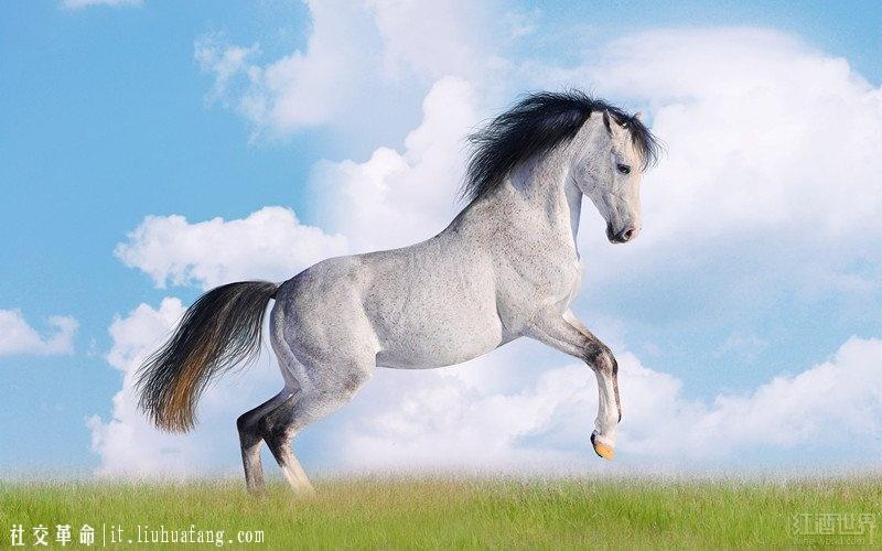 01-horse-140114